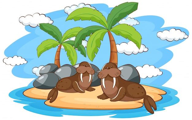 Scena con due trichechi sull'isola Vettore gratuito