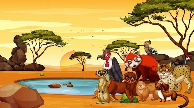 Сцена с дикими животными в саванне Premium векторы