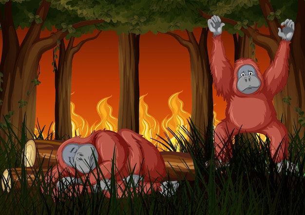 Scene with wildfire and two chimpanzees Free Vector