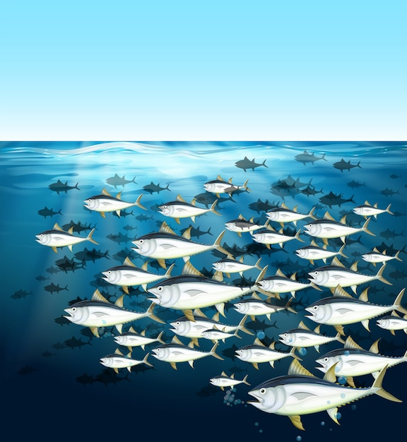 School of tuna swimming under the sea Free Vector