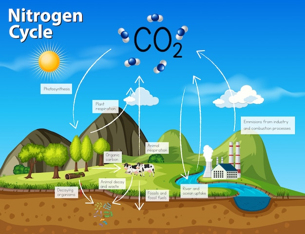 Science nitrogen cycle co2 Premium Vector