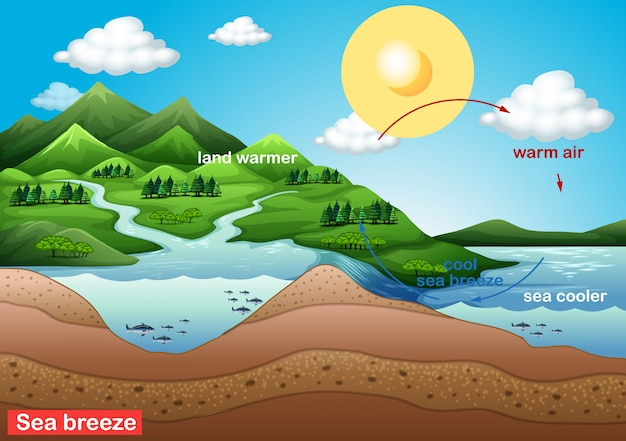 Science poster for sea breeze Free Vector