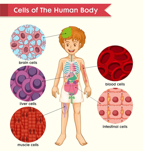 Scientific medical of cell types Vector | Free Download