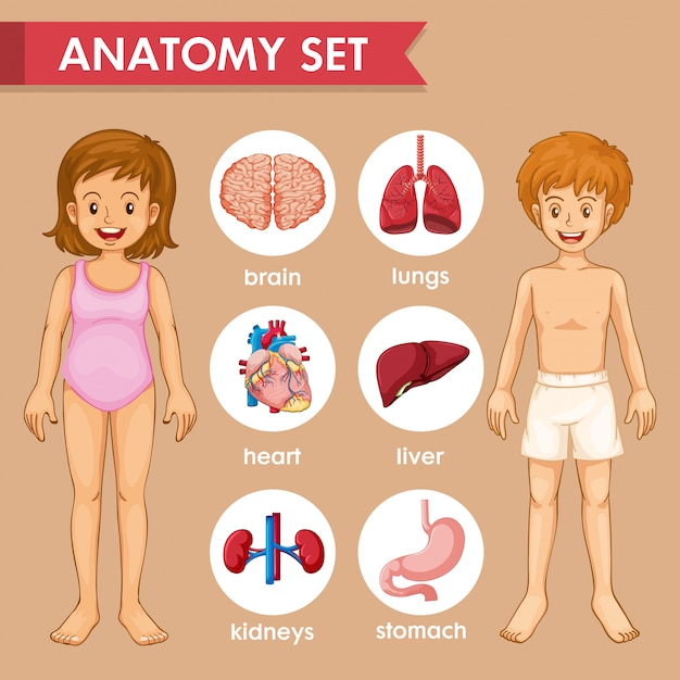 Scientific medical infographic of kids organs Free Vector