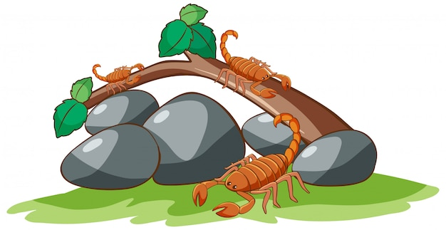 Скорпионы на белом Бесплатные векторы