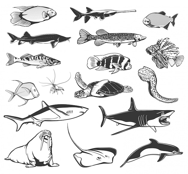 Sea fish and ocean animal  icons Premium Vector