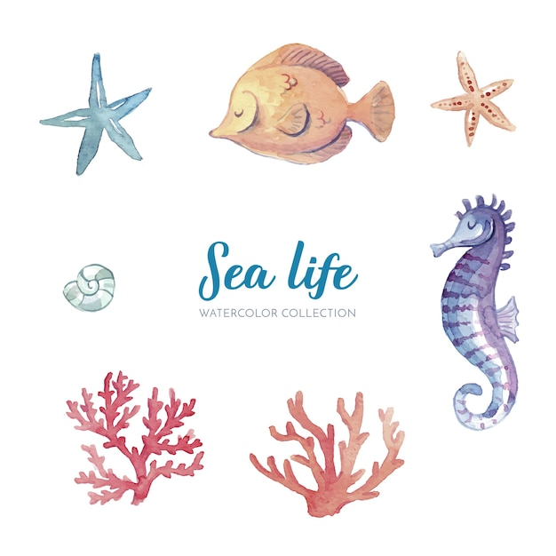 Sea life watercolor collection Free Vector