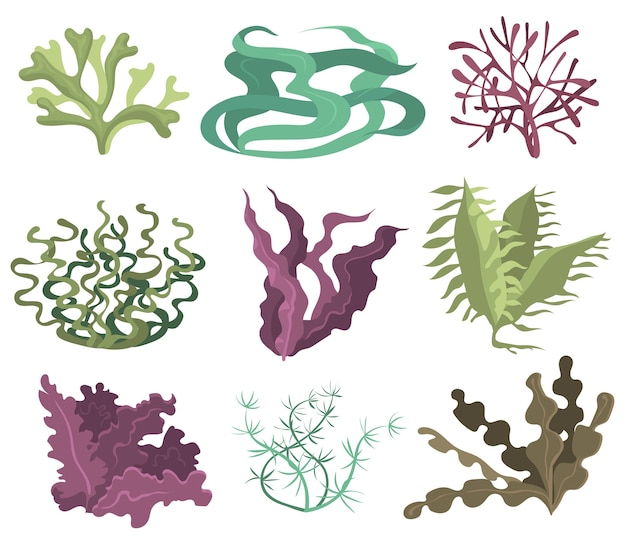 Set di alghe marine. alghe verdi viola e marroni isolate su priorità bassa bianca. raccolta di illustrazioni vettoriali per la vita oceanica, pianta marina, flora sottomarina, concetto di natura Vettore gratuito