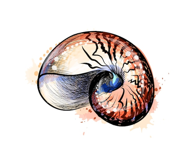 Sea shell from a splash of watercolor, hand drawn sketch.  illustration of paints Premium Vector