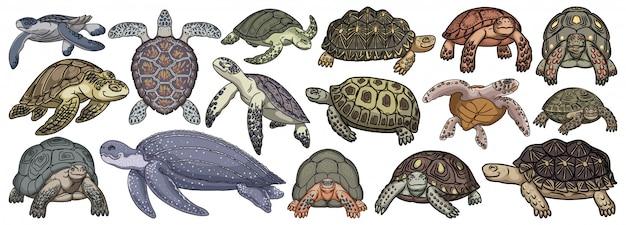 Морская черепаха мультфильм установить значок. иллюстрация черепаха на белом фоне. изолировать мультфильм установить значок морская черепаха. Premium векторы
