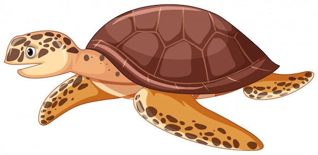 Sea turtle on white background Free Vector