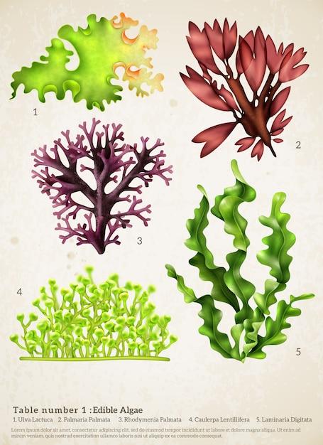 海藻リアルなコレクション 無料ベクター