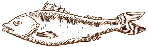 Сибас рыба вектор эскиз рука рисунок Premium векторы