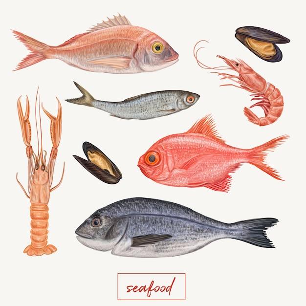 Seafood illustration Premium Vector