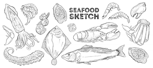 Seafood sketch set. hand drawing cuisine. Premium Vector