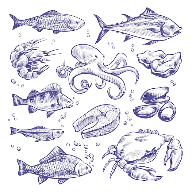 Seafoods hand drawn. sea fishes oysters mussels lobster squid octopus crabs prawns salmon shellfish natural sea food Premium Vector