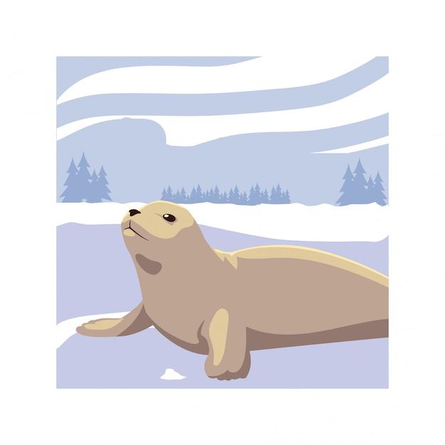 Seal at the north pole Premium Vector