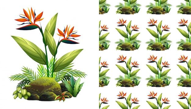 극락조 꽃으로 완벽 한 배경 디자인 무료 벡터