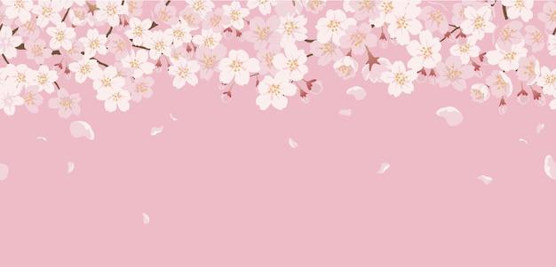 Бесшовные цветочные с вишневыми цветами в полном цвету на розовом. Бесплатные векторы