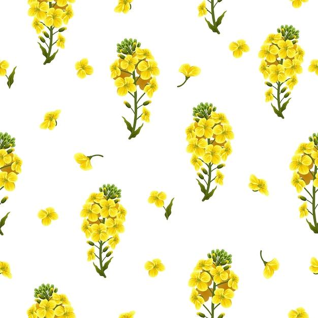 シームレスパターン菜の花と葉、カノーラ。 無料ベクター