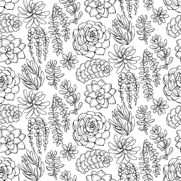 Seamless pattern with hand drawn succulent plants on white background Premium Vector