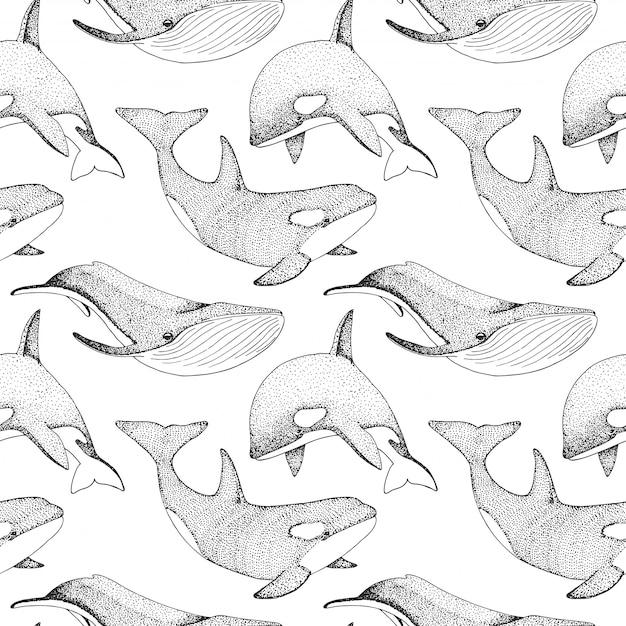 Бесшовный фон с китами, орками и другими рыбами. Premium векторы