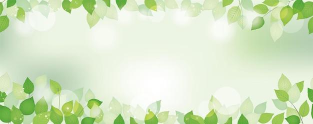 Бесшовные акварель свежий зеленый фон с пространством для текста, векторные иллюстрации. экологически сознательный образ с растениями и солнечным светом. горизонтально повторяемый. Premium векторы