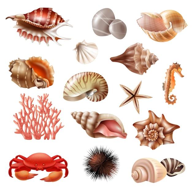 Seashell realistic set Бесплатные векторы