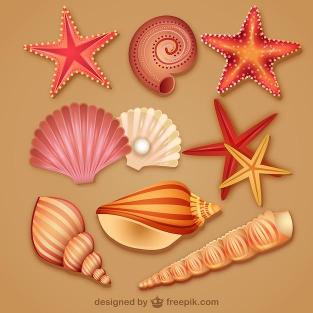 матки рисунок ракушек и морских звезд практичный наряд