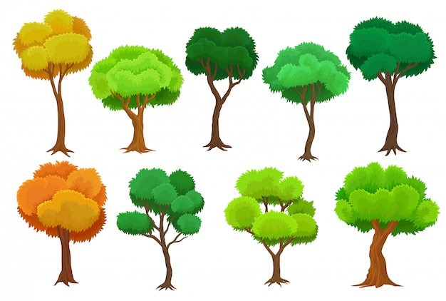 Seasonal trees set, summer and autumn trees  illustrations on a white background Premium Vector