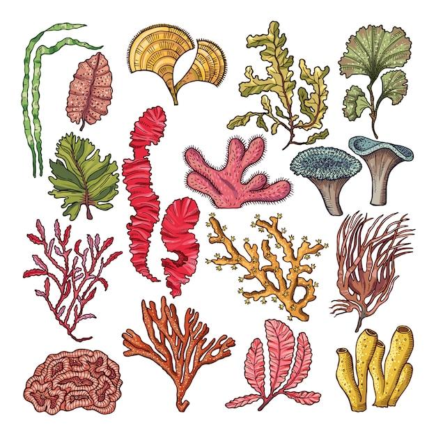 Seaweed and corals. Premium Vector