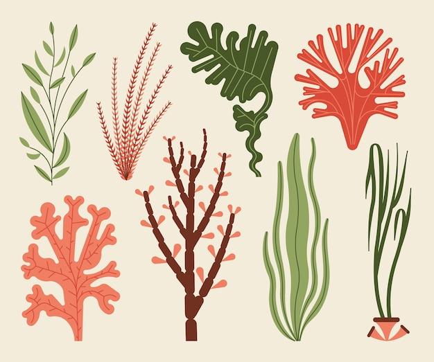 白で隔離の海藻セットイラスト。海藻と水生海藻。 Premiumベクター