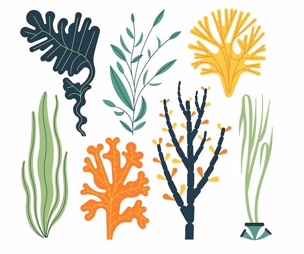 Иллюстрация набора морских водорослей, изолированные на белом. морские растения и водные морские водоросли. Premium векторы