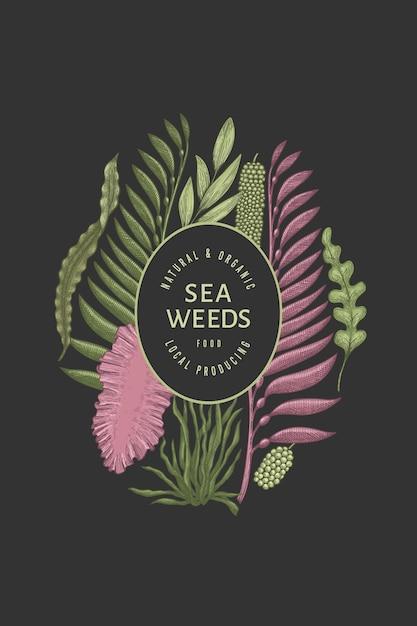 海藻テンプレート。手描きの海藻イラスト。刻まれたスタイルのシーフードバナー。レトロな海の植物の背景 Premiumベクター