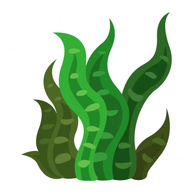 Seaweed vector Premium Vector
