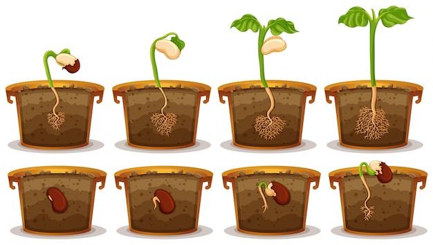 Seed germination in claypot illustration Premium Vector