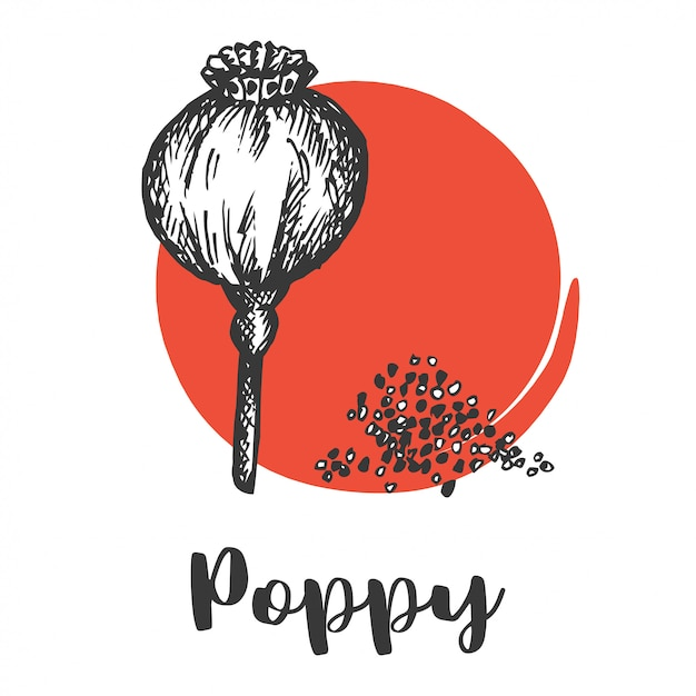 Seeds and nuts set. vintage hand drawing of poppy seed vector illustration wild flower Premium Vector
