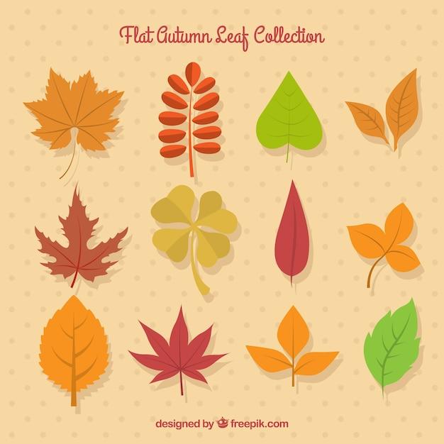 انتخاب برگ پاییز