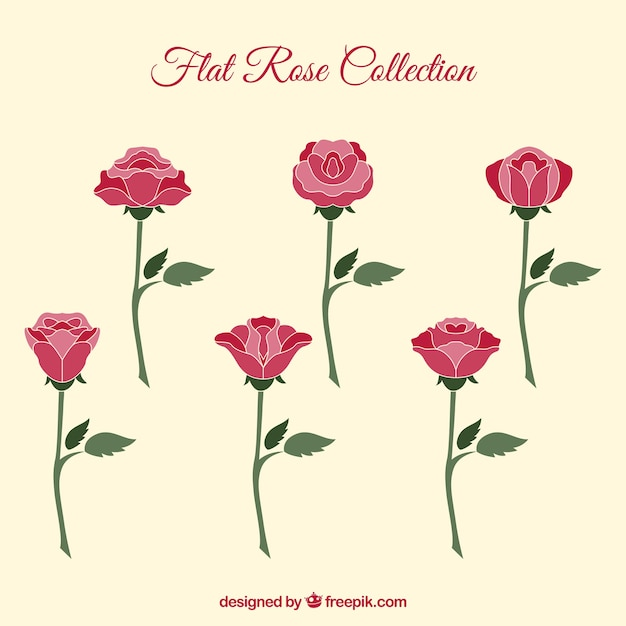 Selection of flat roses with variety of\ designs