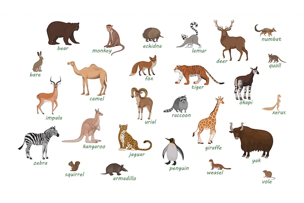 Set of animals. armadillo camel deer echidna impala numbat okapi quoll raccoon urial vole weasel xerus lemur zebra hare Premium Vector