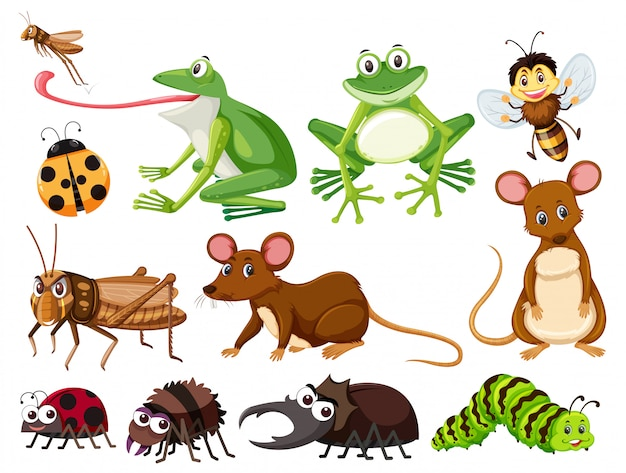 Set of animals and insects Premium Vector