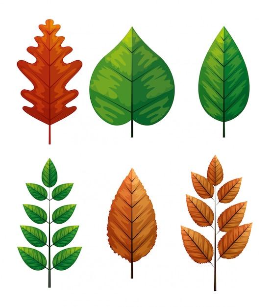 Set di foglie d'autunno Vettore gratuito