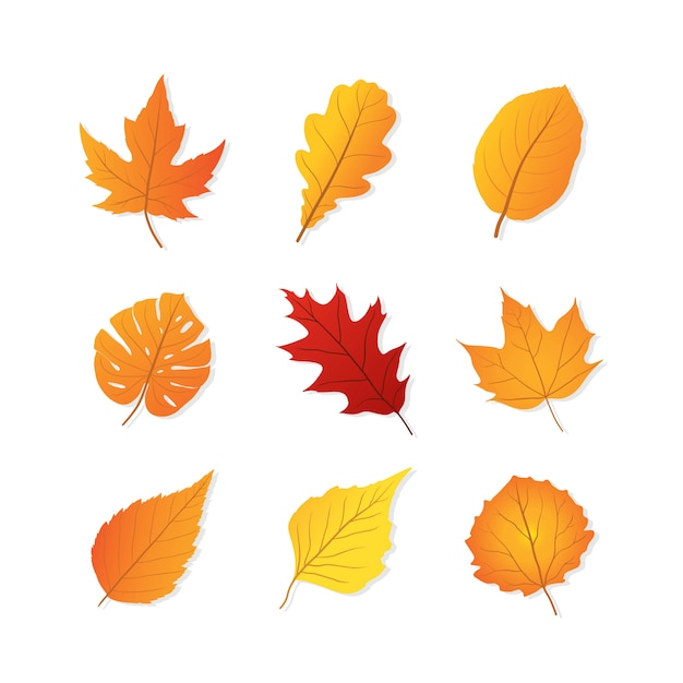Set of autumn leaves Premium Vector