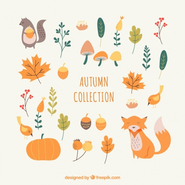 Set of autumnal elements in warm colors Free Vector