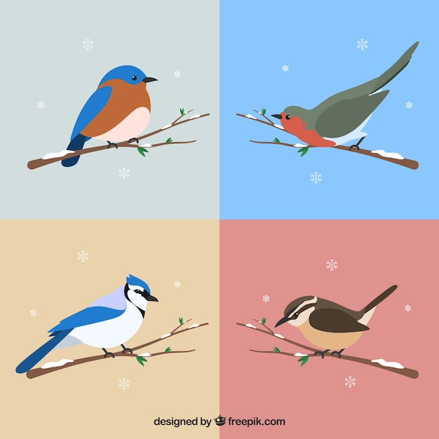 Set of beautiful birds of snowy branches Free Vector