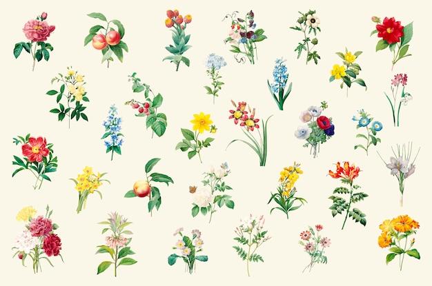 Set of beautiful blooming wildflowers Free Vector