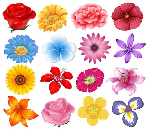 A set of beautiful flowers Premium Vector