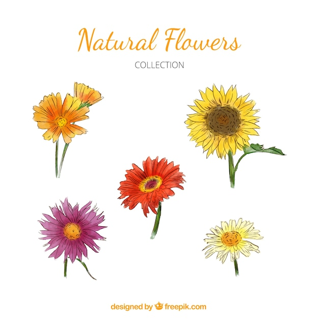 Set of beautiful hand-drawn watercolor flowers Free Vector