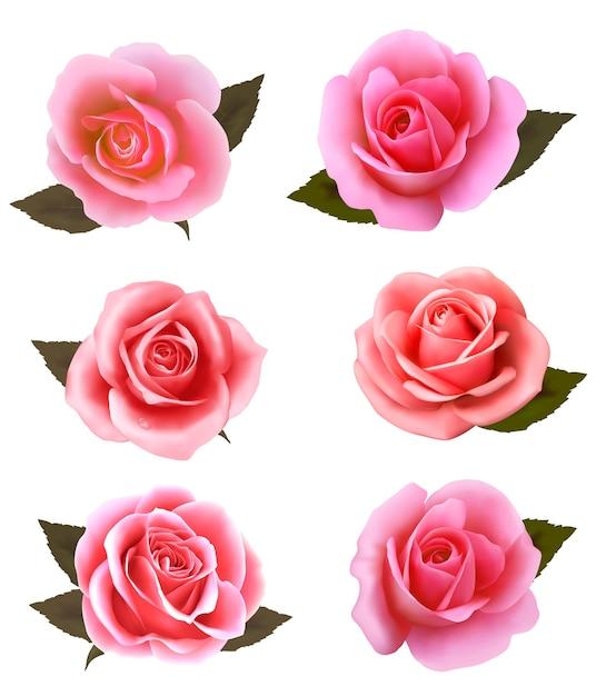Set of beautiful pink roses. Premium Vector