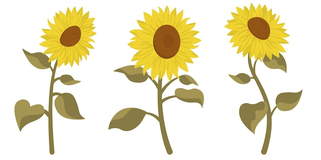 Set of beautiful sunflowers. flowers in cartoon style isolated on white background. Premium Vector
